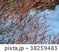 冬の小枝 38259483