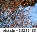冬の小枝 38259485