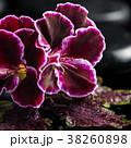 フラワー 花 きれいの写真 38260898