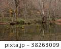 池 木 森林の写真 38263099