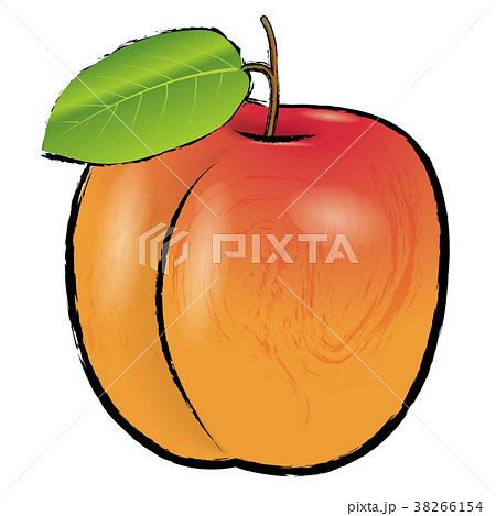 アプリコットのイラスト(線アリ)  杏の実  手描き風イラスト  38266154