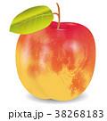 果物 果実 杏のイラスト 38268183