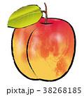 果物 果実 杏のイラスト 38268185