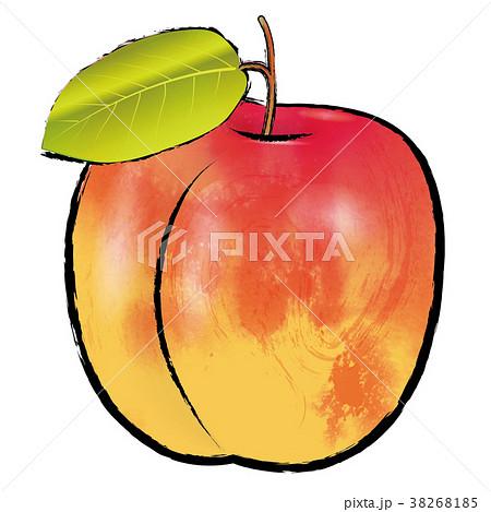 アプリコットのイラスト(線アリ) |杏の実 |水彩風 手描き風イラスト 墨絵 38268185
