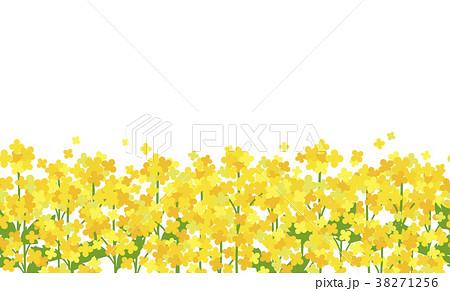 菜の花畑白背景シームレスのイラスト素材 38271256