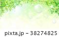 新緑 若葉 コピースペースのイラスト 38274825