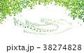 新緑(若葉) 38274828
