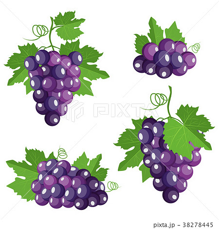 Collection of isolated grape.  38278445