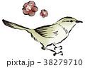 梅の花とウグイス 38279710