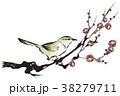 梅の花とウグイス 38279711