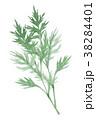 山菜 よもぎ 春野菜のイラスト 38284401