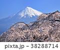 富士山 花 桜の写真 38288714
