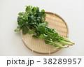 パクチー 香味野菜 シャンツァイの写真 38289957