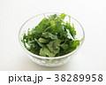 パクチー 香味野菜 シャンツァイの写真 38289958