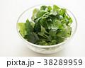 パクチー 香味野菜 シャンツァイの写真 38289959