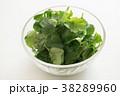 パクチー 香味野菜 シャンツァイの写真 38289960