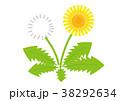タンポポ 38292634