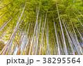 竹 竹林 新緑の写真 38295564