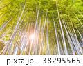 竹 竹林 新緑の写真 38295565