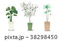 観葉植物 38298450