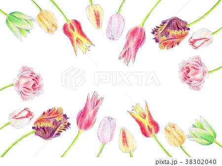 色鉛筆で描いたチューリップ 38302040