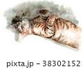 猫 水彩 キジトラのイラスト 38302152