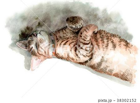 水彩で描いた昼寝するキジトラの子猫 38302152