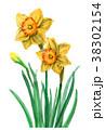 水彩 花 水仙のイラスト 38302154