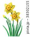 水彩 花 水仙のイラスト 38302155