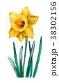 水彩 花 黄色のイラスト 38302156