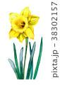 花 黄色 水仙のイラスト 38302157