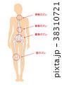 骨 骨格 女性のイラスト 38310721