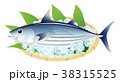 カツオ 鰹 白背景 38315525