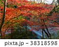 秋 紅葉 冠水橋の写真 38318598