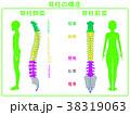 人のシルエットと脊柱(後面・側面)緑 38319063