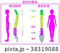 人シルエット脊柱(後面・側面)ピンク 38319088