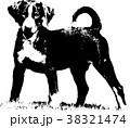 Appenzeller puppy - Illustration 38321474