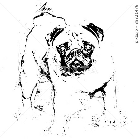 A beautiful pug standing -  Illustration 38321476