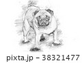 A beautiful pug standing - sketch style 38321477