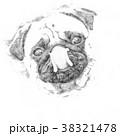 Little pug looks into the camera - Sketch  38321478