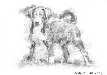 Appenzeller puppy - Sketch style 38321479