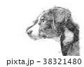 Appenzeller puppy - Sketch style 38321480