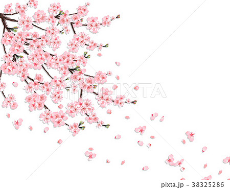 Sakura. A lush cherry branch with pink flowers in 38325286