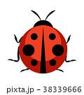てんとう虫 テントウムシ 天道虫のイラスト 38339666