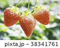 イチゴの季節 38341761
