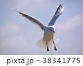 ユリカモメ 鳥 水鳥の写真 38341775
