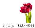 チューリップ 赤 花の写真 38344544