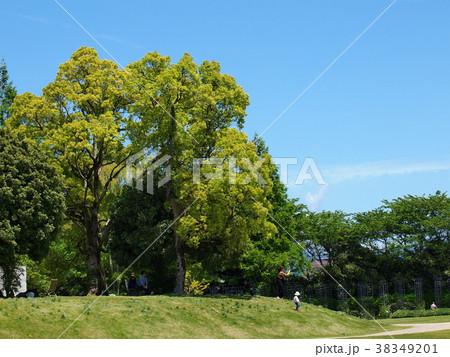 初夏の木陰 38349201