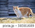 野良猫が日向ぼっこでまどろんでいる様子を撮影 38381689