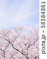 花 フラワー 桃色の写真 38384861